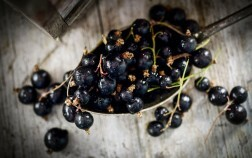 Close up of blackcurrants on a silver spoon