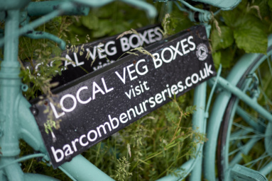 Case Study: Barcombe Nurseries Photography Firm